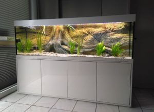 Moderne und günstige Aquariumkombination Eva Aquarium Kombination 1