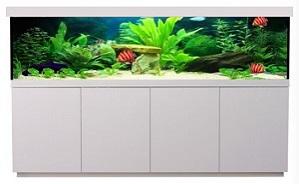 Aquarienkombination direkt vom Hersteller