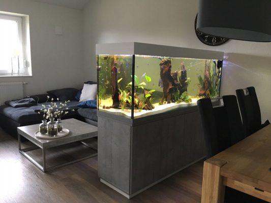 Aquarium Kombination dein Wunschaquarium