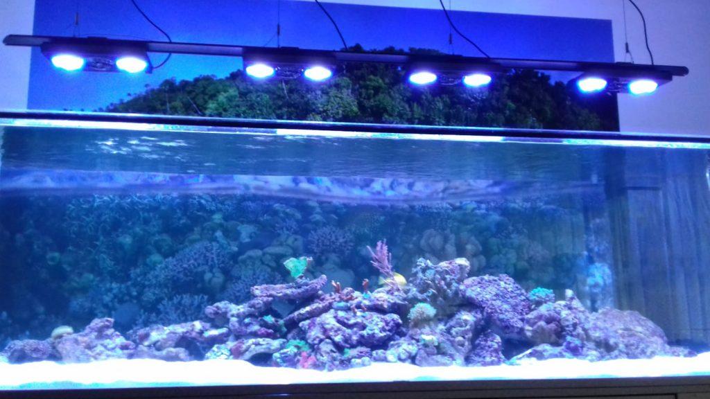 Designer Aquarium im Dunkeln bei Licht