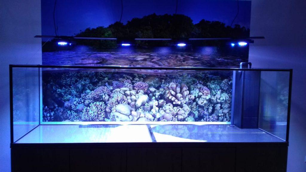 Designer Aquarium mit LED Beleuchtung