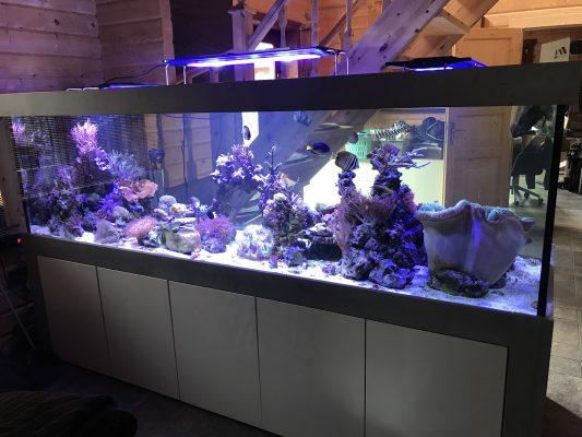 Aquarium Kombination Admiral Beton look