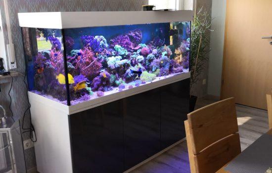 Aquarium-Bau-Friedeberg-Lichtgrau-Weiß-Hochglanz-See-Wasser-Seewasser-Diamant-poliert-brilliant-glas