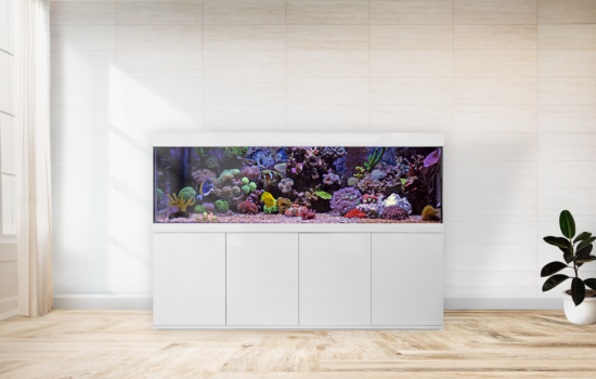 Aquarium Bau Friedeberg Modell Felix optional mit Filter von OASE Eheim Fluval Juwel und Heizstab Beleuchtung JMB Aqualight Schrank Abdeckung Aquarium aus hochwertigem Floatglas oder Weißglas