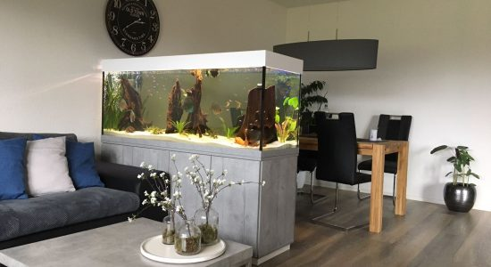 Aquarium-Kombination-Adam-Beton-Woodcon-Diamant-geschliffen-Floatglas-Sonderanfertigung