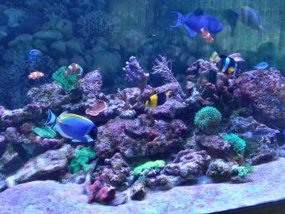 Aquarium kaufen bei deinaqarium
