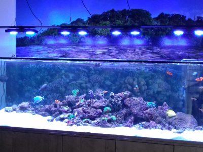 Designer Aquarium im Dunkeln