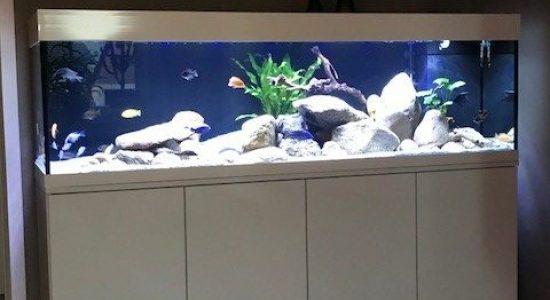 Aquarium-Kombination-Adam-Hochglanz-weiß-Diamant-geschliffen-Floatglas-Sonderanfertigung-4