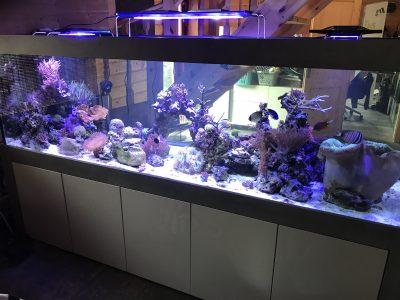 Aquarium-Kombination-Admiral-Beton-Woodcon-Diamant-geschliffen-Floatglas-Sonderanfertigung-Friedeberg-Seewasser-2