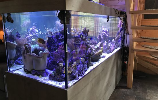 Aquarium-Kombination-Admiral-Beton-Woodcon-Diamant-geschliffen-Floatglas-Sonderanfertigung-Friedeberg-Seewasser-3