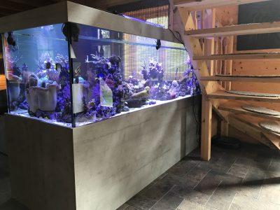Aquarium Kombination Beton Admiral