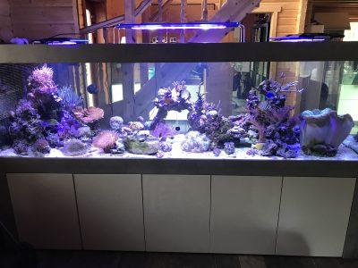 Aquarium-Kombination-Admiral-Beton-Woodcon-Diamant-geschliffen-Floatglas-Sonderanfertigung-Friedeberg-Seewasser