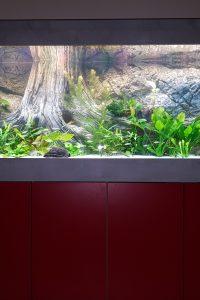 Aquarium-Kombination-Admiral-Hochglanz-Weiß-Burgundrot-Diamant-geschliffen-Floatglas-Sonderanfertigung