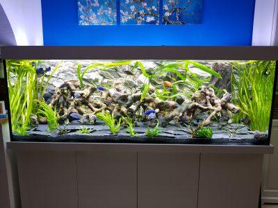 Aquarium-Kombination-Basic-Hochglanz-Weiß-Malawi-Süßwasser- Rückwand-1