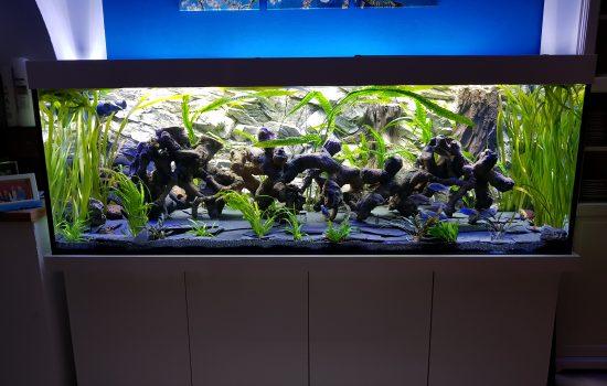 Aquarium-Kombination-Basic-Hochglanz-Weiß-Malawi-Süßwasser- Rückwand-2