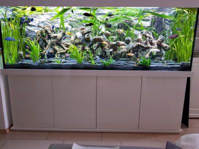 Aquarium-Kombination-Basic-Hochglanz-Weiß-Malawi-Süßwasser- Rückwand