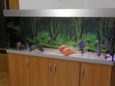 Aquarium-Kombination-Basic-Panorama-Kirsche-Oxford-Silber-Metallic-Diamant-geschliffen-Floatglas-Sonderanfertigung-Friedeberg-Moosgummiunterlage-10