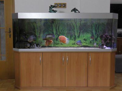 Aquarium-Kombination-Basic-Panorama-Kirsche-Oxford-Silber-Metallic-Diamant-geschliffen-Floatglas-Sonderanfertigung-Friedeberg-Moosgummiunterlage-2