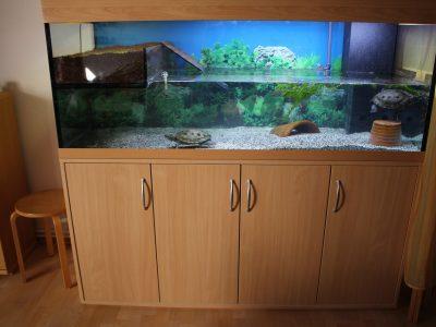 Aquarium-Kombination-Eva-Buche-Diamant-geschliffen-Floatglas-Sonderanfertigung-Friedeberg-Privat-Kunde-2