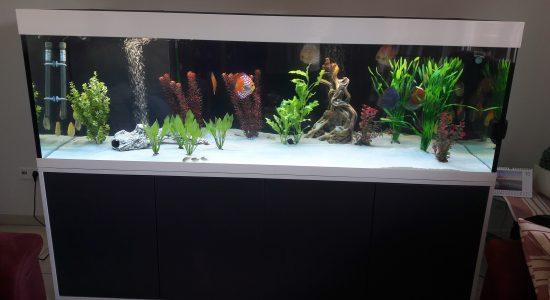 Aquarium-Kombination-Eva-Friedeberg-Schwarz-Weiß-Hochglanz-Handarbeit-1