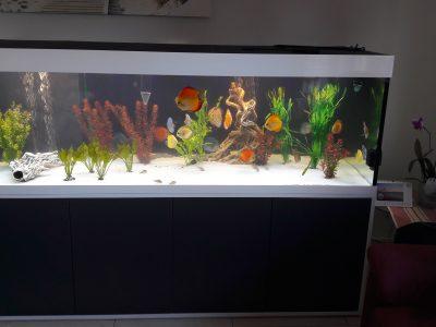 Aquarium-Kombination-Eva-Friedeberg-Schwarz-Weiß-Hochglanz-Handarbeit