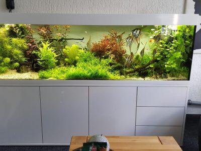 Aquarium-Kombination-Eva-Hochglanz-Weiß-Süßwasser-Diamant-geschliffen-Floatglas-Sonderanfertigung-Kunde-Umbau-Friedeberg