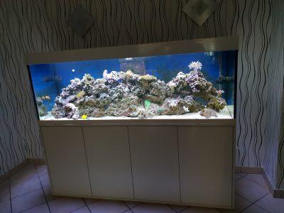 Aquarium-Kombination-Eva-Hochglanz-Weiß-Seewasser-Diamant-geschliffen-Floatglas-Sonderanfertigung-Friedeberg