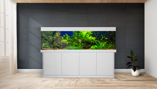 Modell Basic Plus Aquariumkombination kaufen