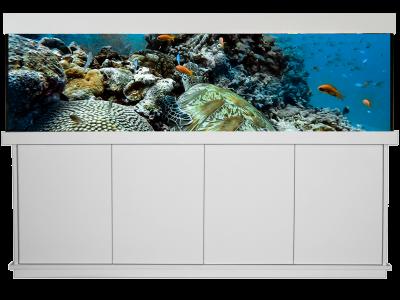 Design Unterwasserwelt