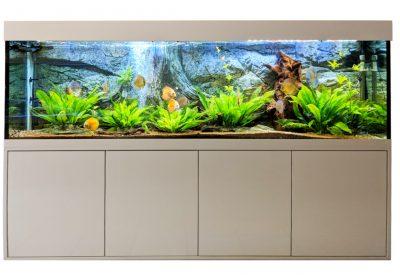 Aquariumkombination Modell Eva
