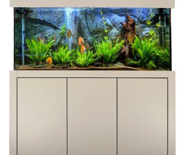 Unser neuer Aquariumkombination