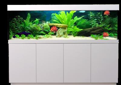Aquarienkombination Aquarium